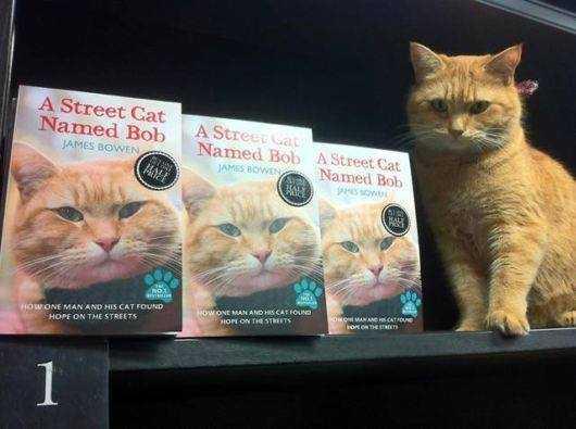 Bob & Books